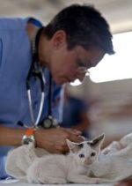 Bakenkop Animal Hospital